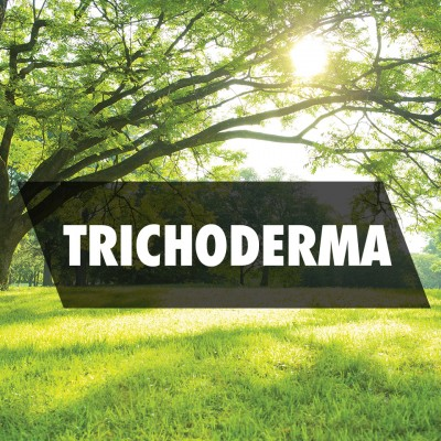Trichoderma Based Products